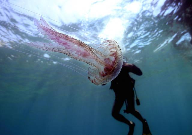 Salute a mare, punture di meduse: tutti i rimedi naturali da conoscere